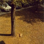 Fotografia William Eggleston